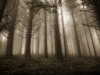 thumbs alberi5 Featured Photoblogger for January