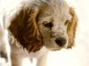 puppy_charm_6_09_mg_9585