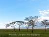 thumbs serengeti acacia 5910 Photoblogger for September