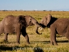 serengeti_elephant_fight_3052