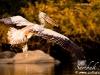 thumbs spot billed pelican ranganthittu mg 4053 Photoblogger for September