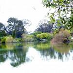 Lake in Golden Gate Park