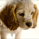 Puppy Charm by Diane Varner